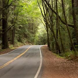Redwoods by Scott Padgett - Landscapes Travel (  )