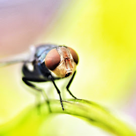 Rainbow Fly by Agus Suhendra Suhendra - Novices Only Macro