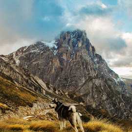 Big Rock, Big Dog. by Mauro Pagliai - Animals - Dogs Portraits ( mountains, dogs, abruzzo, gransasso, husky, corno grande, landscape, italy, malamute )