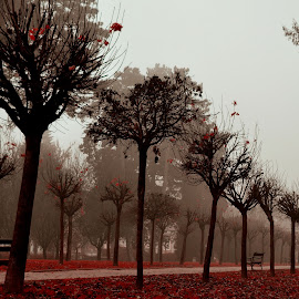Like a soldiers by Manuela Dedić - City,  Street & Park  City Parks (  )