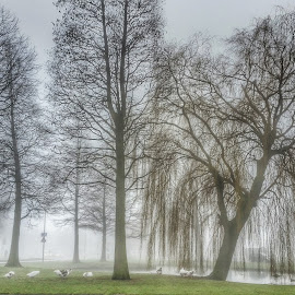 city park fog in the morning by Timo Gorissen - City,  Street & Park  Amusement Parks ( still time, fog, morning glory, special, moments )