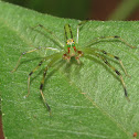 Magnolia Green Jumper (male)
