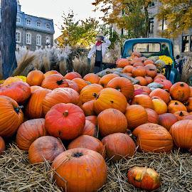 Mess of pumpkins on the Jardins de l'hôtel de ville de Québec by Réjean Côté - City,  Street & Park  City Parks ( city hall, orange, pumpkins, quebec city, mess )