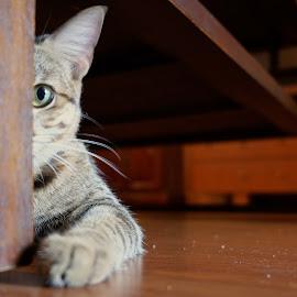Watching you watching me... by Zaibidi Sultan - Animals - Cats Kittens ( playing, kittens )