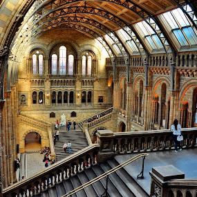 Natural History Museum (London) 1 by Gabriel Tocu - Buildings & Architecture Public & Historical ( building, architecture, museum, historical, public,  )