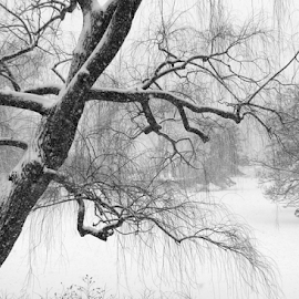 Winter in Central Park by Gina Gomez - Nature Up Close Trees & Bushes ( winter landscape, winter, snowstorm, winter image, winter photo, photos of winter, new york winter, snowstorm photo, central park winter, photos of snow, snow landscape )