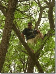 08 tree climbing  Booki