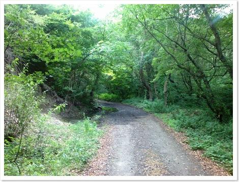 საავტომობილო გზა შუა ტყეში