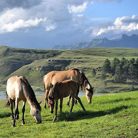 Horses in the burg by Ultramel Mayo - Animals Horses ( horses, wild, mountains, Drakensburg )