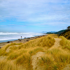 Oregon Coast - Pacific Northwest USA by Tyrell Heaton - Landscapes Beaches ( oregon, grass, beach, pacific northwest, usa, coast )