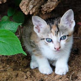 Watching by Sayeeram Rengaraj - Animals - Cats Kittens