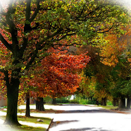 Autumn by Amanda Coertze - Nature Up Close Trees & Bushes ( colorful, autumn, street, trees,  )