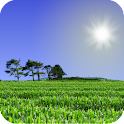Cornfield Live Wallpaper icon