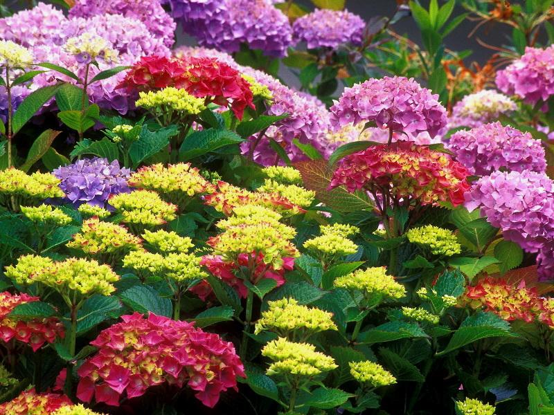 http://lh6.ggpht.com/mendes1961/SLsL20tDezI/AAAAAAAAEA0/NKZC-Hy0_NI/s800/Natures-Flower-1-7PRYLCQL6B-800x600.jpg
