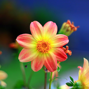My Flower by Marlon Managi - Nature Up Close Flowers - 2011-2013 (  )