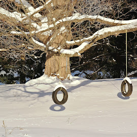 Tire Swing Reflections by Janet Lyle - Landscapes Weather ( winter, snow, swing )