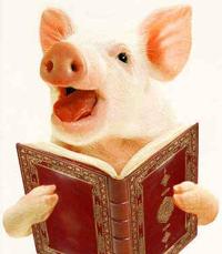 PigMocksKoran.jpg