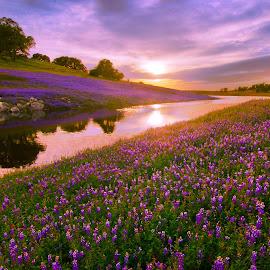 by Dustin Penman - Landscapes Prairies, Meadows & Fields ( sunset )