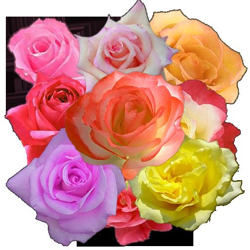 A8 Rose Slot Machine LOGO-APP點子
