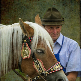 Portrait with a Haflinger by Eva Lechner - Digital Art People ( south tyrol, almabtrieb, haflinger, portrait )
