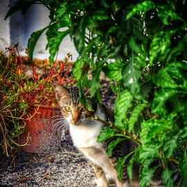 by 铭丰 陈 - Animals - Cats Kittens (  )