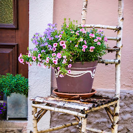 Country Chair by Deidre Elzer-Lento - Artistic Objects Furniture ( pink flower, countryside, chair, deidre elzer-lento, europe, plants, photos by dee, pink, germany, furniture, travel photography, purple flower, Chair, Chairs, Sitting )