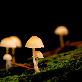 Tiny Mushrooms by Richard Kam - Nature Up Close Mushrooms & Fungi ( mushroom, fungi, damp, trunks, forest,  )