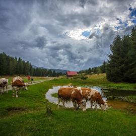 In front of rain by Stanislav Horacek - Landscapes Prairies, Meadows & Fields