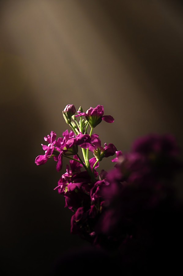 by William Lofgren - Nature Up Close Flowers - 2011-2013