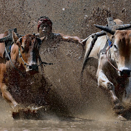 Crazy Mud by Maizal Chaniago - Sports & Fitness Rodeo/Bull Riding ( sport )