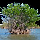 Rons Heritage Everglades Park icon