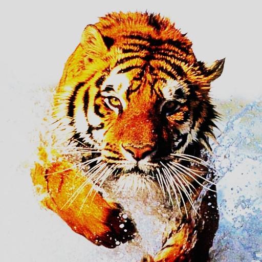 3Dの虎5 體育競技 App LOGO-硬是要APP