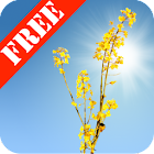 Yellow Field Free icon