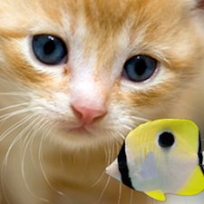 KITTY & FISH LIVE WALLPAPER#10