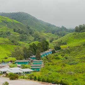 Tea Green mountain by Yasser Abusen - Landscapes Mountains & Hills ( farm, mountain, rainy, rainy day, green, cloudy, tea, tea farm )