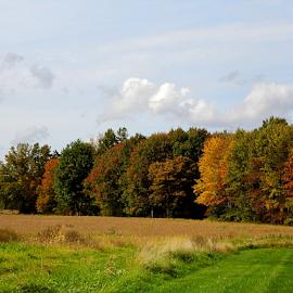 A Field  by Lorie  Carpenter  - Landscapes Prairies, Meadows & Fields ( field, orange, grass, green, fall, yellow, landscape,  )