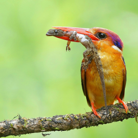 The End !! by Prashant Choudhary - Animals Birds