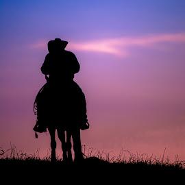 Nearing Sundown by Gary Hanson - Sports & Fitness Rodeo/Bull Riding ( cowboy, single, horse, rodeo, sundown, prairie )
