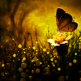 Into The Dark of Heaven by Donald Jusa - Digital Art Things ( butterfly, animals, arts, mood, insects, digital )