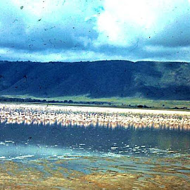 Ngorongoro Flaminngos 1973 by Jim Dicken - Novices Only Landscapes ( landscape africa, volcano, ngorongoro crater, flamingos, tanzania,  )