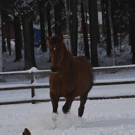 Chloe and Dakar  by Cecilia Hjärtmyr - Animals Horses