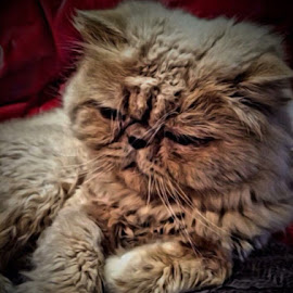 Nuki  by Rob Booth - Animals - Cats Portraits
