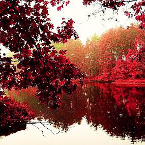 Farmington Lake by Dmitriy Tucker - Nature Up Close Water ( connecticut lake fall foliage water park tree )