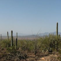 Sonoran Desert - Plants and Animals