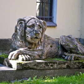 Lion by Victoria Artamonova - Buildings & Architecture Statues & Monuments ( sculpture, lion, russia, st.petersburg, alexander nevsky lavra )