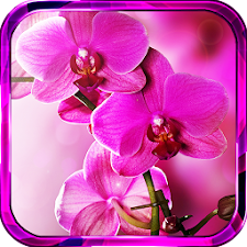 Orchide Spings live wallpaper