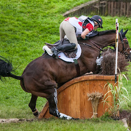 I don't think so by Sue Niven - Sports & Fitness Other Sports ( eventing, water jump, weg, xc, france, refusal )