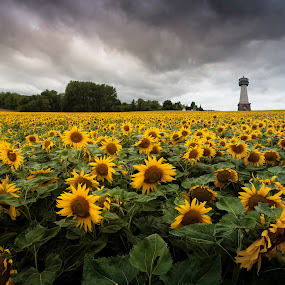 The Tower by Frank Quax - Flowers Flower Gardens
