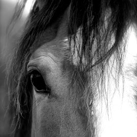 Bronc by Amanda Rutherford - Animals Horses