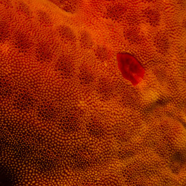 starfish skin - underwater by Claudia Weber-Gebert - Abstract Macro ( abstract, underwater, fish, starfish, sea, ocean, close up, skin, macro, pattern, mediterranean, france, diving )